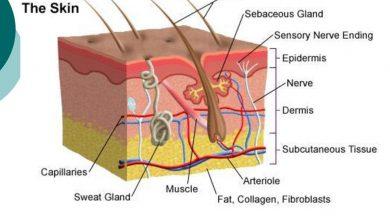 Photo of Bagian-Bagian Kulit dan Fungsinya Masing-Masing